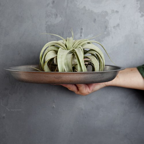日本Aoyoshi 不銹鋼橢圓形餐盤 (銀、長23.2公分)
