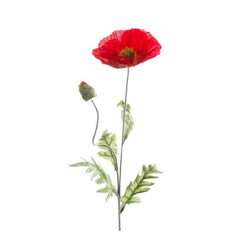 荷蘭Emerald人造花藝 紅色罌粟花