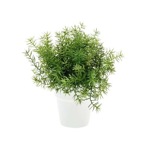 荷蘭Emerald人造植栽 蘆筍葉灌木 (白盆)