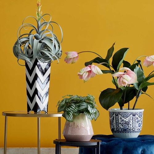 荷蘭Emerald人造植物 空氣鳳梨 (長58公分)
