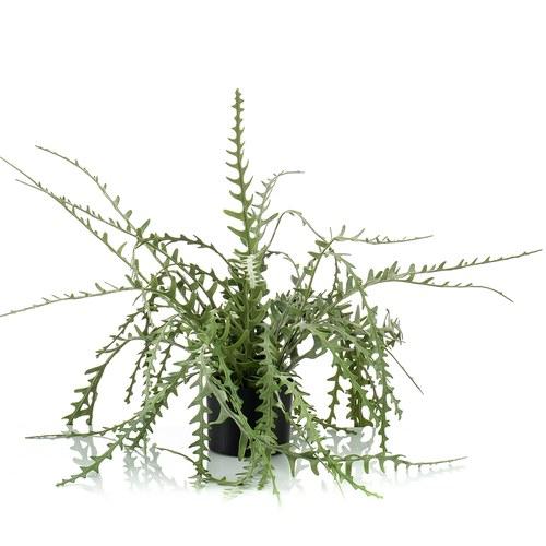 荷蘭Emerald人造植栽 曇花仙人掌(膠盆、50公分)