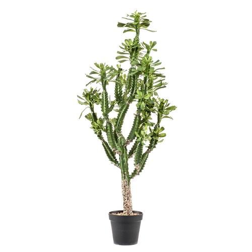 荷蘭Emerald人造植栽 龍骨仙人掌(黑盆、140公分)
