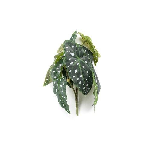 荷蘭Emerald人造植物 銀星秋海棠(30公分)