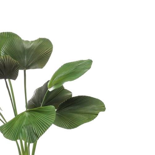荷蘭Emerald人造植栽 圓扇椰子(130公分)