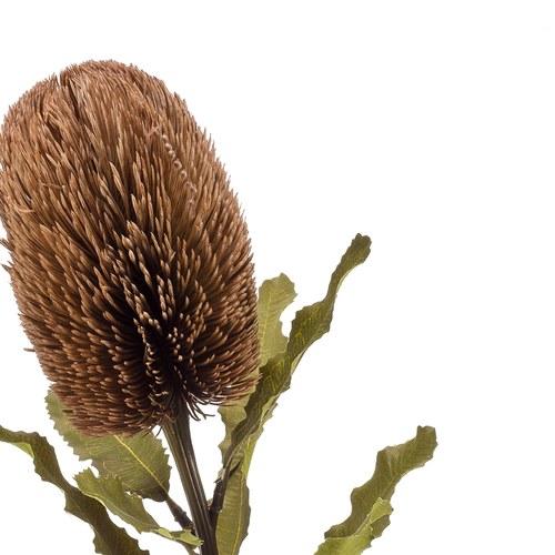 荷蘭Emerald人造植物 斑克木(棕)