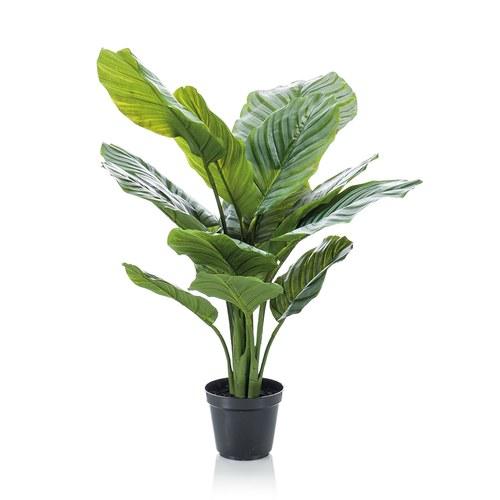 荷蘭Emerald人造植栽 青蘋果竹芋 (膠盆、60公分)