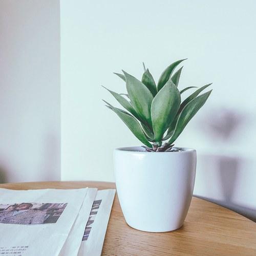 荷蘭Emerald人造植物 小龍舌蘭灌木 (白盆、20公分)