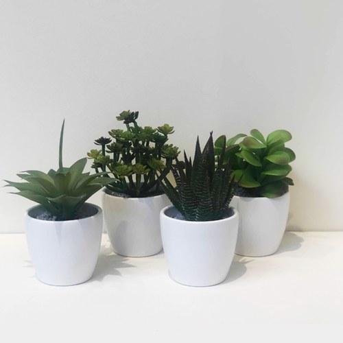荷蘭Emerald人造植物 費拉蘆薈盆栽 (白盆、20公分)