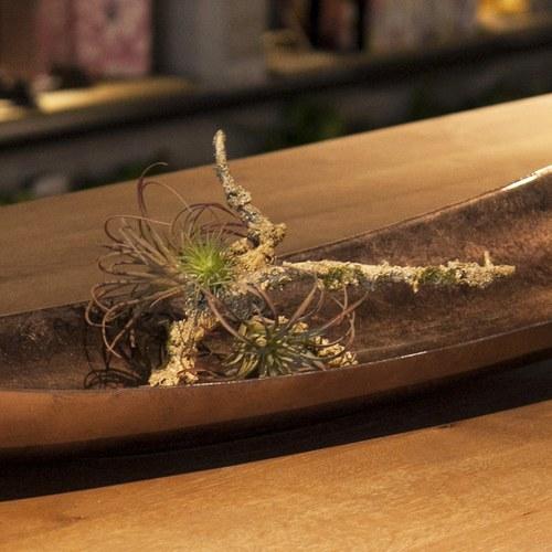 荷蘭Emerald人造植物 空氣鳳梨枝幹
