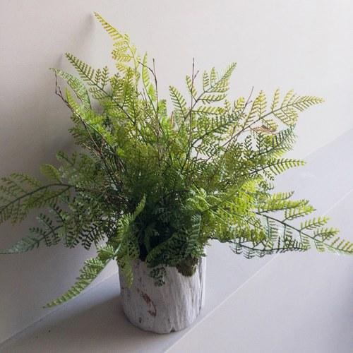 荷蘭Emerald人造植栽 羊齒蕨 (水泥盆、長30公分)