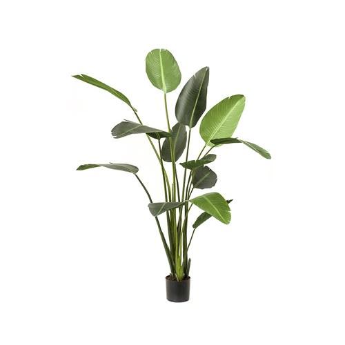 荷蘭Emerald人造植栽 天堂鳥綠葉叢 (高230公分)