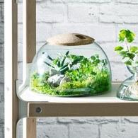 英國 LSA 伊甸園計畫 景觀花園溫室花器(高16.5公分)