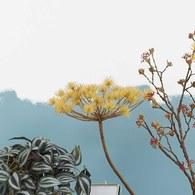荷蘭Emerald人造植物 黑麥草莖 (長43公分)