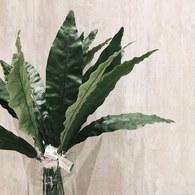 荷蘭Emerald人造植物 鐵角蕨綠葉片