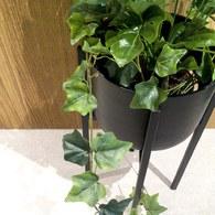 荷蘭Emerald人造植物 深綠色長春藤