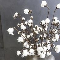 荷蘭Emerald人造植物 雪白棉花