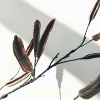 荷蘭Emerald人造植物 種子莢果
