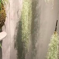 荷蘭Emerald人造植物 垂懸松蘿鳳梨灌木