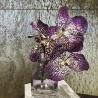 荷蘭Emerald人造花藝 紫色萬代蘭