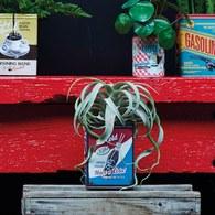 荷蘭Emerald人造植物 空氣鳳梨 (長25公分)