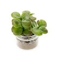 荷蘭 Emerald人造植物 多肉圓刀盆栽