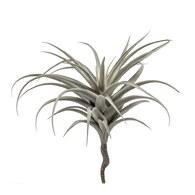 荷蘭 Emerald人造植物 空氣鳳梨(長40公分)