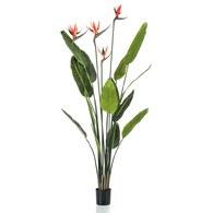荷蘭 Emerald 人造植栽 天堂鳥綠葉叢 (150cm)