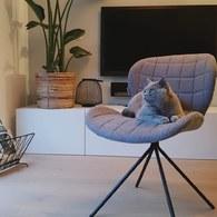 荷蘭Zuiver OMG!時尚玩色單椅(灰)