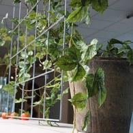 荷蘭Emerald人造植物 深綠色垂懸長春藤 (長70公分)