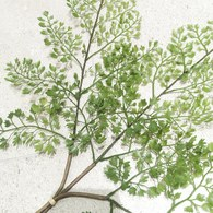 荷蘭Emerald人造植物 鐵線蕨 (長58公分)