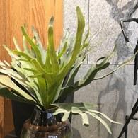 荷蘭Emerald人造植物 鹿角蕨 (長48公分)