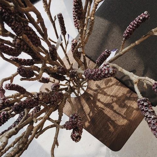 荷蘭Emerald人造植物 酒紅色千層枝條